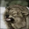 Cold_Wolf